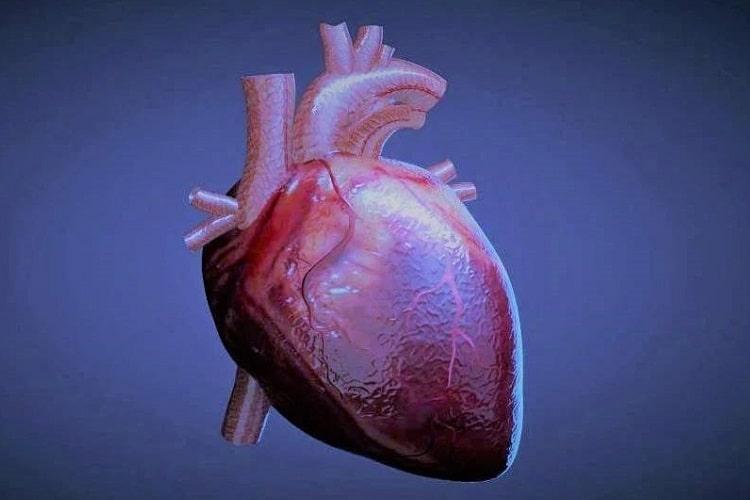 ماهیچههای قلب