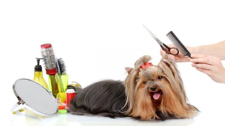 آرایش و اصلاح حیوانات